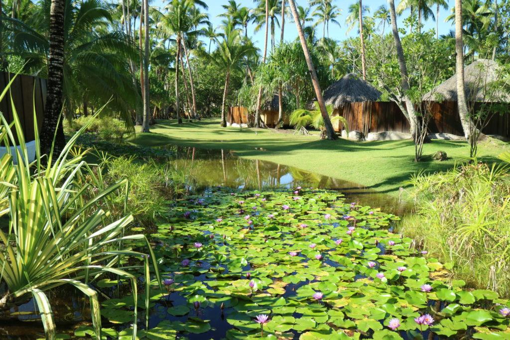 タヒチボラボラ島パールビーチリゾートスパのジャングル