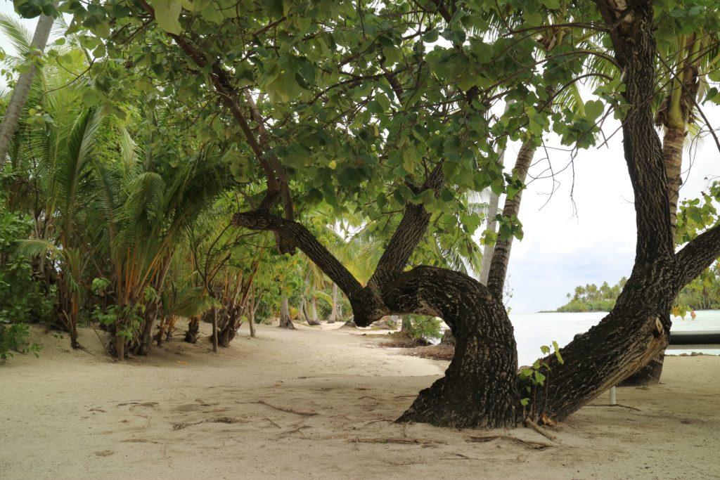 タハア島ル タハア島のジャングル
