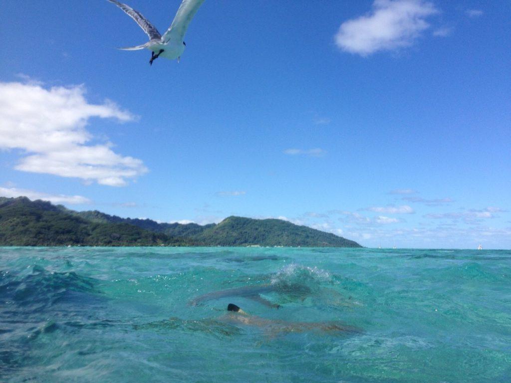 タヒチの海で泳ぐサメ