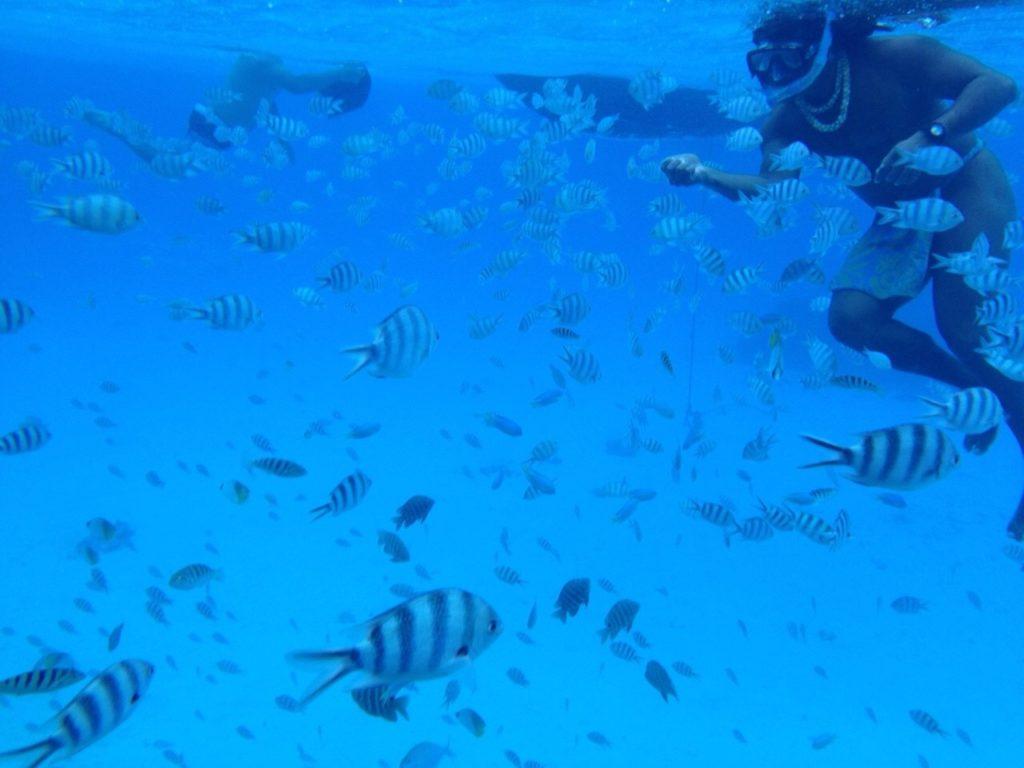 タヒチのシュノーケリング水中の熱帯魚